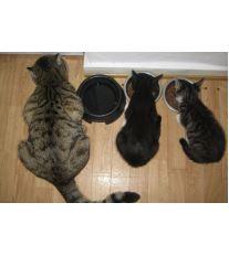 Skladovanie potravín pre mačky