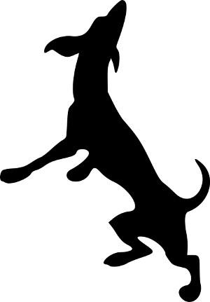 Podľa aktivity psa