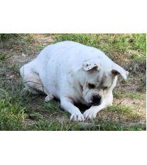 Ako sa vyvarovať psej obezite?