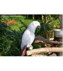 Šesť základných zložiek pre šťastný a zdravý život papagája
