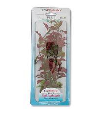 Rastlina TETRA Red Ludwigia 23 cm