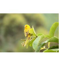 Exotičtí ptáci pro začátečníky