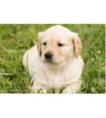 Do boje proti parazitům aneb Ochraňte svého psa při procházce