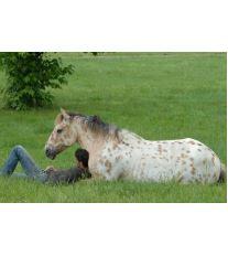 Prečo jazdiť na koni?