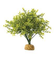 Rastlina EXO TERRA Boxwood Bush