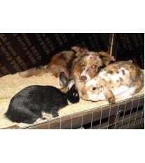 Soužití psa a králíka