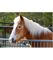 Majitelem koně nanečisto