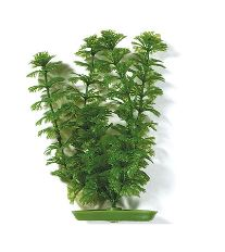 Rastlina LIVING WORLD Ambulia 30 cm