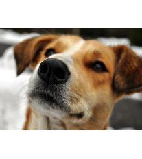 Seriál o krmení - 1. díl | Základy anatomie trávicího systému psa