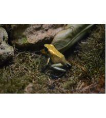 Chov exotických žab - Bydlení