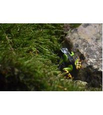 Chov exotických žab - Krmení