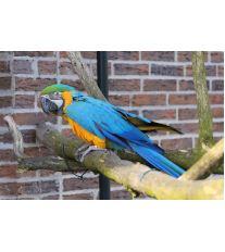 Jakého si pořídit papouška