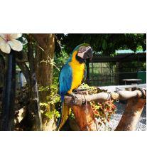 Jak se postarat o papouška, když nejste doma