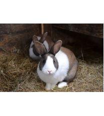 Senem hlodavce ani králíka neurazíš