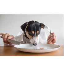 Nejčastější chyby psího stravování
