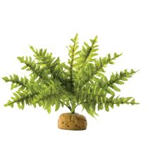 Rastlina EXO TERRA Boston Fern