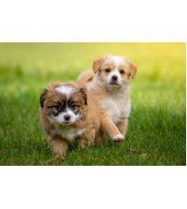 Dominantní nebo plaché štěně?