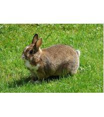 Jak ochránit králíčka před parazity?