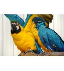Udržujte papoušky v pohybu
