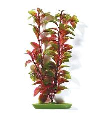 Rastlina MARINA Red Ludwigia 20 cm