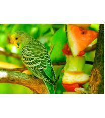 Pamlsky pro andulky a papoušky