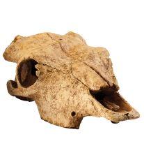 Dekorácie EXO TERRA bůvolí lebka