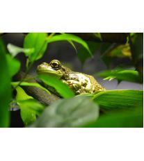 Chov exotických žab - Úvod