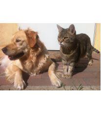 Škrkavka psí a kočičí u člověka