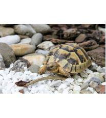 Ako si vybrať správnu korytnačku?