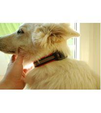 Obojek pro psa nylonový reflexní - červený