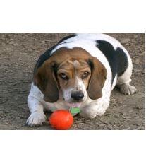 Když psa trápí nadváha