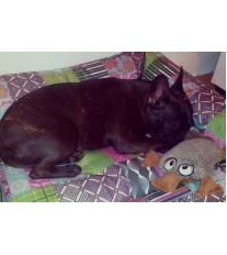 Pelech pro psa Argi obdélníkový - Lily