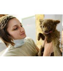 Očkovanie psov