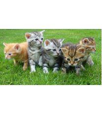 Starostlivosť o mačiatka
