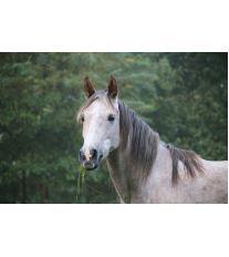 Když kůň onemocní