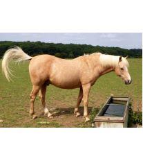 Proč se ten kůň takhle chová?