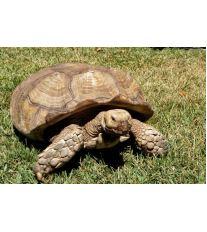 Ochorenia korytnačiek