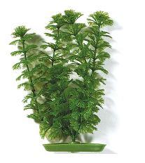 Rastlina MARINA Ambulia 20 cm
