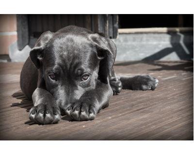 Ochráňte svoje psy a mačky: Ako nedať šancu kliešťom a blchám