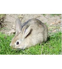 TOP 20 zajímavostí ze života zakrslých králíků