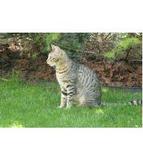 Savanová mačka