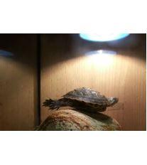 Chov vodních želv