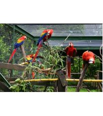 Dva papoušci v kleci