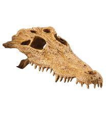 Dekorácie EXO TERRA krokodílej lebka