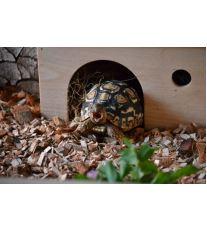 Chov suchozemské želvy - Bydlení a výbava