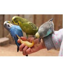 Toxické potraviny pre papagájov