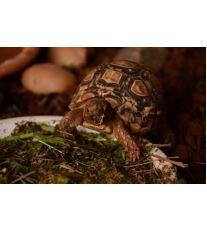 Chov suchozemské želvy - Krmení