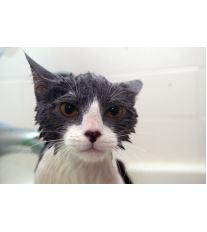 Kúpanie domácej mačky - áno či nie?