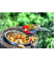 Viete, že papagáje milujú mäso?