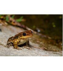 Chov exotických žab - Veterinární problémy - 2. část